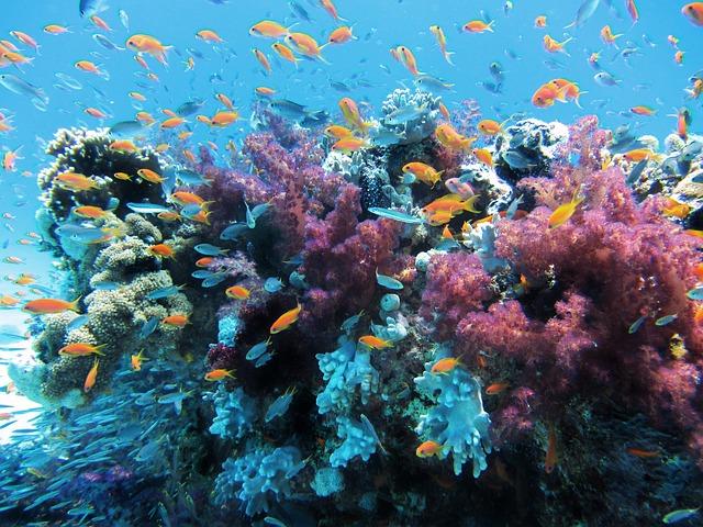 marine-park-center-tioman-gemeinschaft-der-neun-inseln